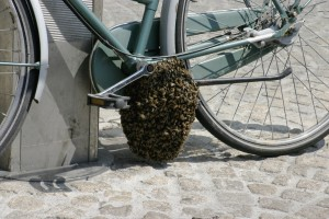 swarm-bike