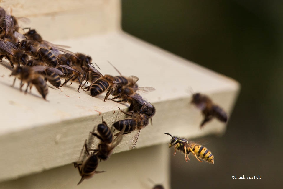 Cork Beekeepers